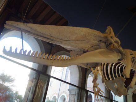 museo di storia naturale 1